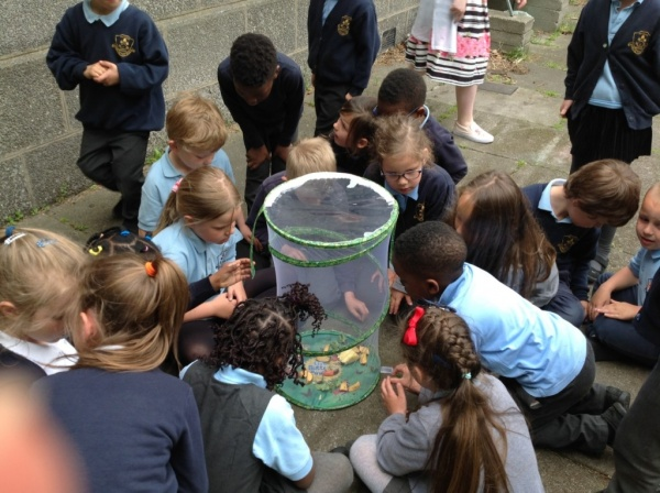 Primary 1 trip to Doonies farm and the release of our butterflies.